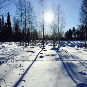 Talvi02